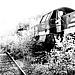 loco_trein_bw_rails.jpg